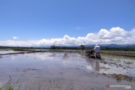 Papua Barat tingkatkan ketahanan pangan ditengah pandemi