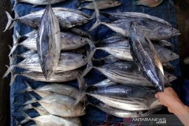 Harga ikan turun di Makassar Page 2 Small