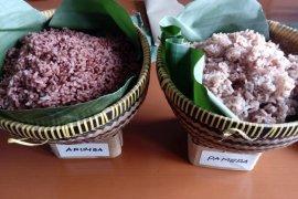 Inpari Arumba, padi inovasi Balitbangtan kaya antioksidan