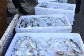 Nelayan Bengkulu sumbang 90 kilogram ikan segar untuk tim medis COVID-19