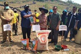 Petani Aceh Utara tanami 50 hektare jagung manfaatkan lahan replanting sawit