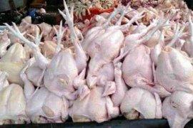 Dua hari jelang Ramadhan harga ayam  potong di Deliserdang anjlok