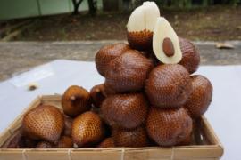 Salak hasil inovasi Balitbangtan jadi unggulan ekspor Bintan