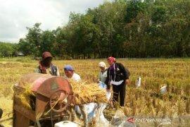 Mentan Syahrul Yasin minta petani muda manfaatkan KUR kembangkan pertanian modern