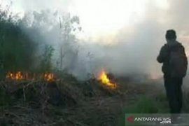 Presiden Jokowi perintahkan 4 langkah antisipasi kebakaran hutan dan lahan
