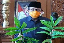 Gubernur Jambi instruksikan Dishut teliti khasiat daun Sungkai untuk obati pasien  COVID-19