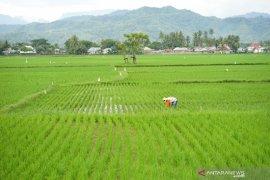 Presiden tekankan ketersediaan air di beberapa sentra pertanian