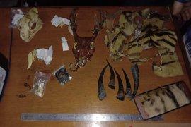 BKSDA-polisi tangkap seorang pria yang terlibat perdagangan kulit harimau