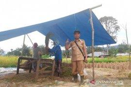 Koptan Taruna Tani topang ketersediaan stok beras Sumut di tengah COVID-19
