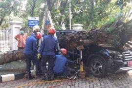 Satu unit Toyota Rush penyok tertimpa pohon kelapa sawit