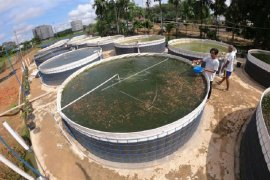 Budi daya ikan menggunakan bioflok di Sungai Duren Muarojambi