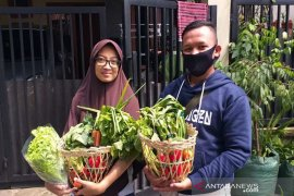 Semangat petani muda di tengah pandemi