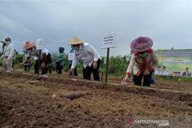 Kutim canangkan program pemanfaatan lahan dan pekarangan