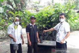 Di tengah COVID-19, BPPSDMP motivasi petani Sumut dengan bantuan bibit kopi