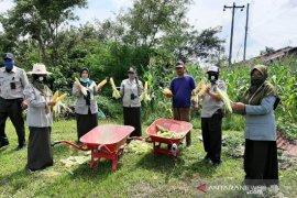 Polbangtan Medan dukung gerakan pangan lokal melalui kegiatan Kampus Mandiri Pangan