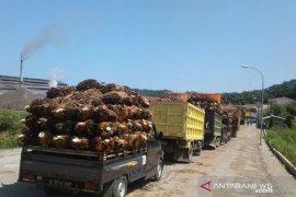 Harga sawit di Mukomuko turun