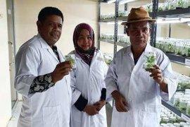 Bupati Abdya tinjau pengembangbiakkan pisang lewat kultur jaringan