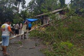 Sejumlah jaringan listrik di Nias tertimpa longsor dan pohon tumbang