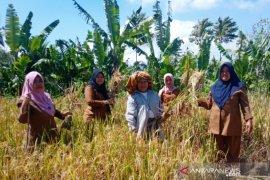 Buruh tani perempuan Tapsel butuh sentuhan teknologi pertanian