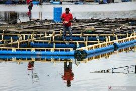 Sekitar 500 Kg  ikan keramba di Mukomuko mati