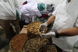 Indonesia bisa garap peluang tren obat herbal