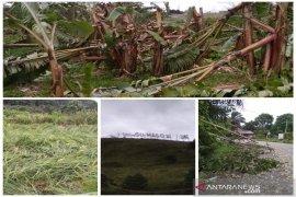 Angin kencang sisakan kerugian besar ekonomi petani Sipirok