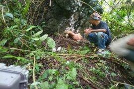 Petugas gabungan pasang kamera trap di lokasi sapi yang dimangsa harimau Bahorok Langkat