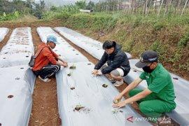 Mahasiswa Polbangtan Bogor ajak petani gunakan teknologi GAP