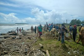 Pemkab Nias kubur bangkai babi yang berserakan di Pantai Tagaule Nias