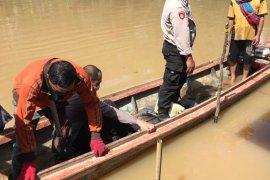 Seorang warga Loban hilang diduga diterkam buaya saat berenang