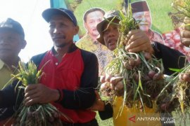 BI: Tiga kabupaten di Kalsel kerja sama penuhi kebutuhan bawang merah