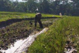 Hari Pangan, Peneliti: Momentum evaluasi kebijakan ketahanan pangan