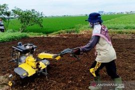 Mahasiswi Polbangtan operasikan traktor tangan bantu para petani Bekasi
