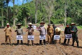 Pemprov Malut canangkan gerakan tanam hortikultura