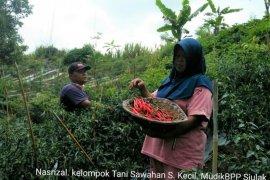 Jaga stok pangan menjelang lebaran, petani Kerinci panen raya hortikultura