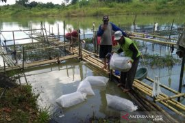 Indocement opens ex-mining to foster community for fish farming