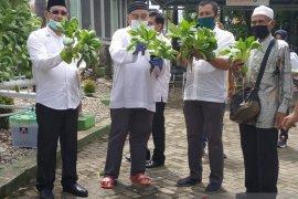Bupati dan Ketua TP-PKK panen sayur hidroponik