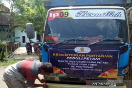 Perusda Kalbar datangkan cabai rawit dari Tuban untuk stabilisasi harga