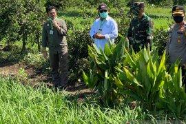 Mentan tinjau lokasi di Kalsel untuk optimalisasi lahan rawa