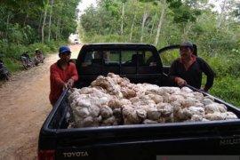 Dinas Perkebunan Kaltim bantu tingkatkan mutu karet dua kelompok tani