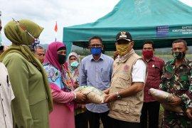 Aceh Besar tanam beberapa varietas di musim gadu