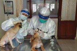 Rumah Sakit Hewan Unud beri layanan gratis untuk anjing dan kucing lokal