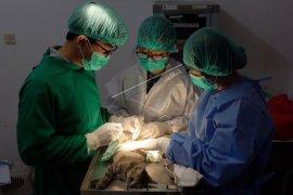 Pelayanan kesehatan hewan saat pandemi COVID-19