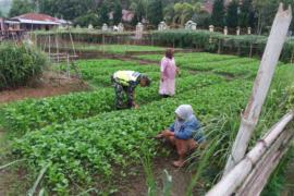 Babinsa Desa Ulu Air dampingi petani demi ketahanan pangan