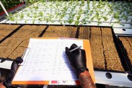 Berkebun tanaman Hydroponik diatap rumah