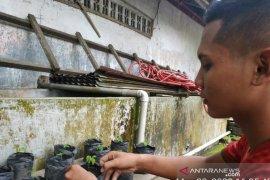 Dimasa COVID-19, Polbangtan Medan giat ajak petani manfaatkan lahan pekarangan