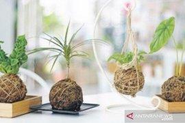 Teknik menanam tanpa pot ala Jepang