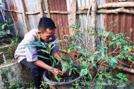 Mahasiswa Polbangtan Medan mengabdi demi ketahanan pangan rumahtangga