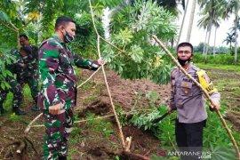 Kodim Nagan Raya galakkan penanaman ubi kayu untuk ketahanan pangan ditengah pandemi