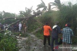 Hujan deras guyur Kota Bogor, pohon tumbang di empat lokasi